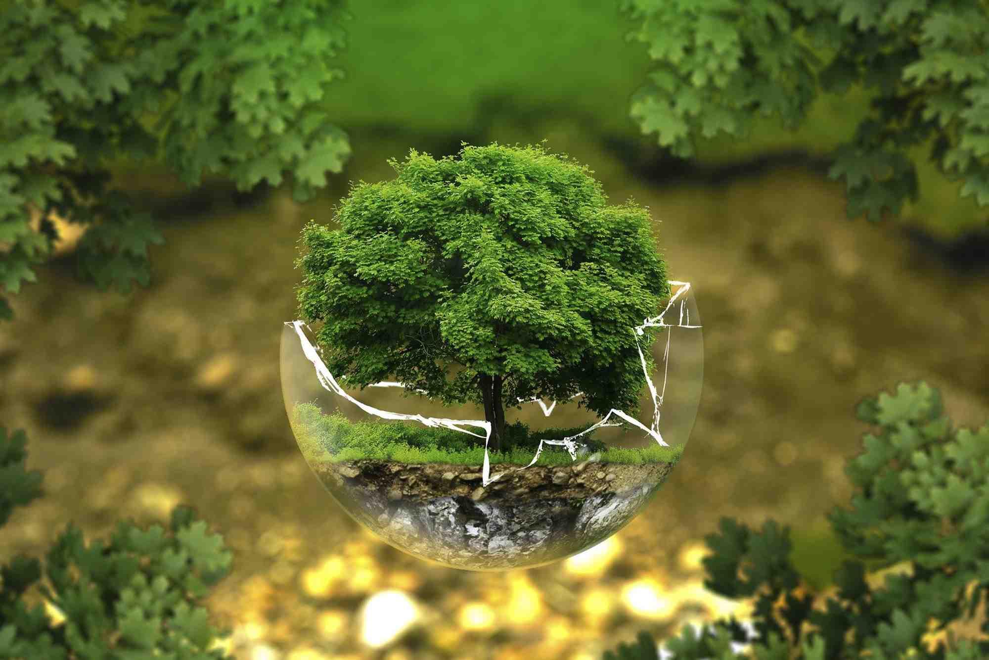 Ekolojik Okuryazarlık