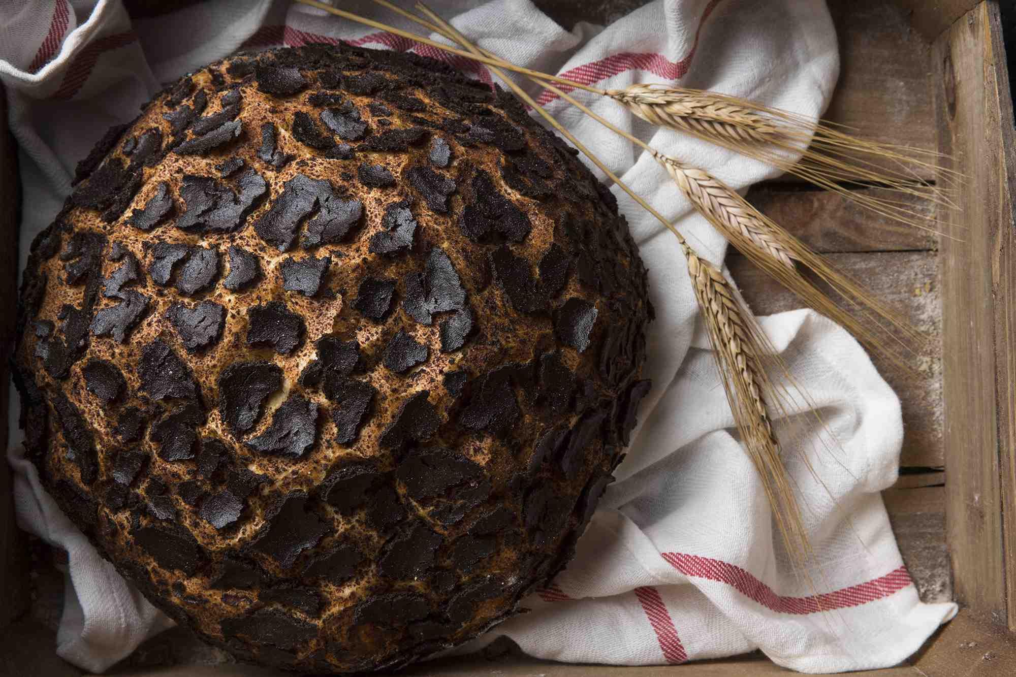 Profesyonel Ekmekçilik Eğitimleri/Profesyonel Butik Artisan Ekmekçilik
