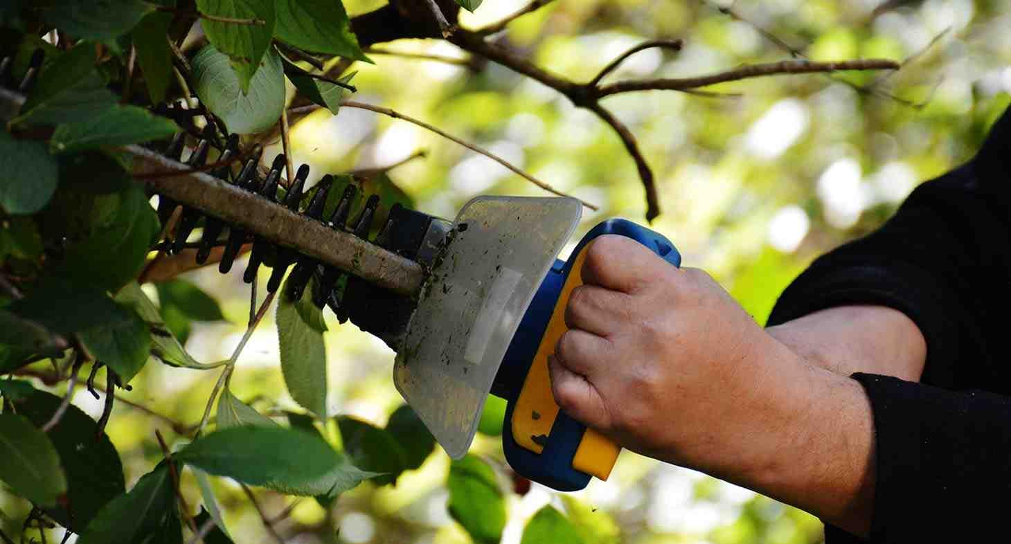 Meyve Ağaçlarında Aşılama