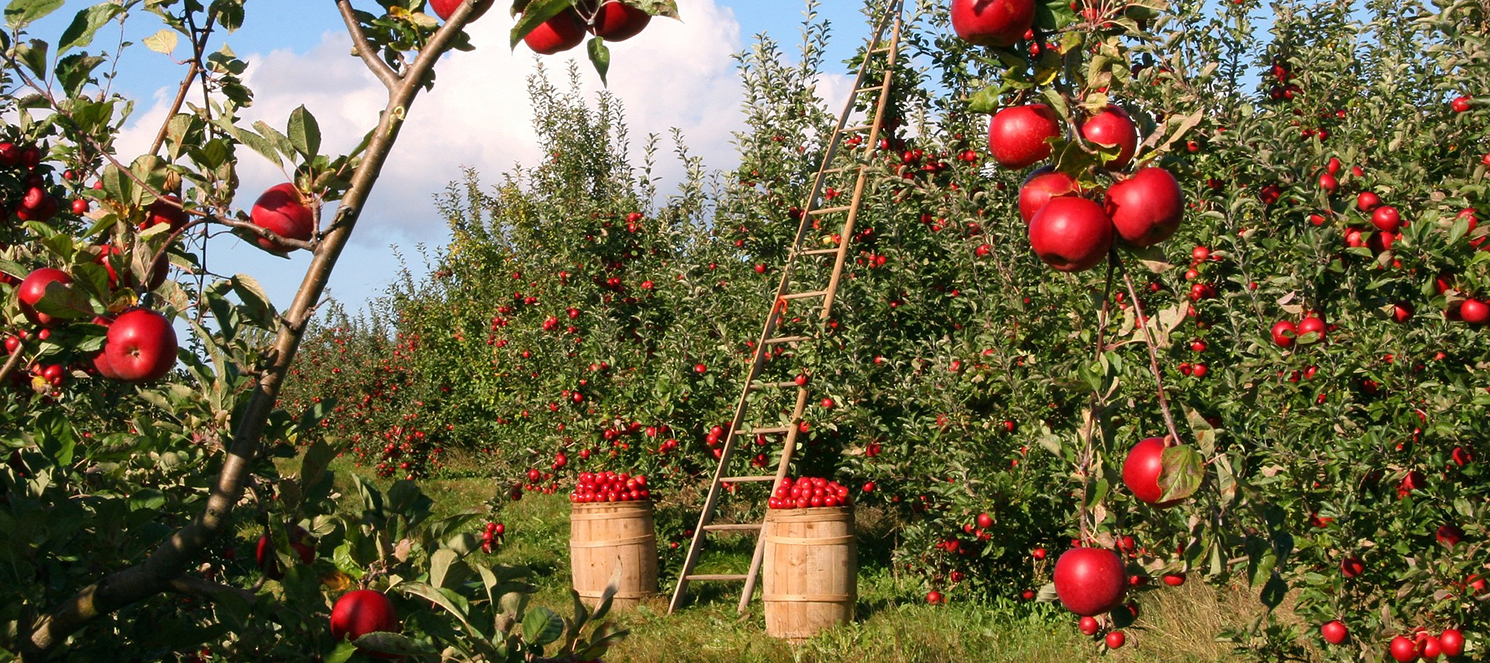 Meyve Bahçelerinde Gübreleme
