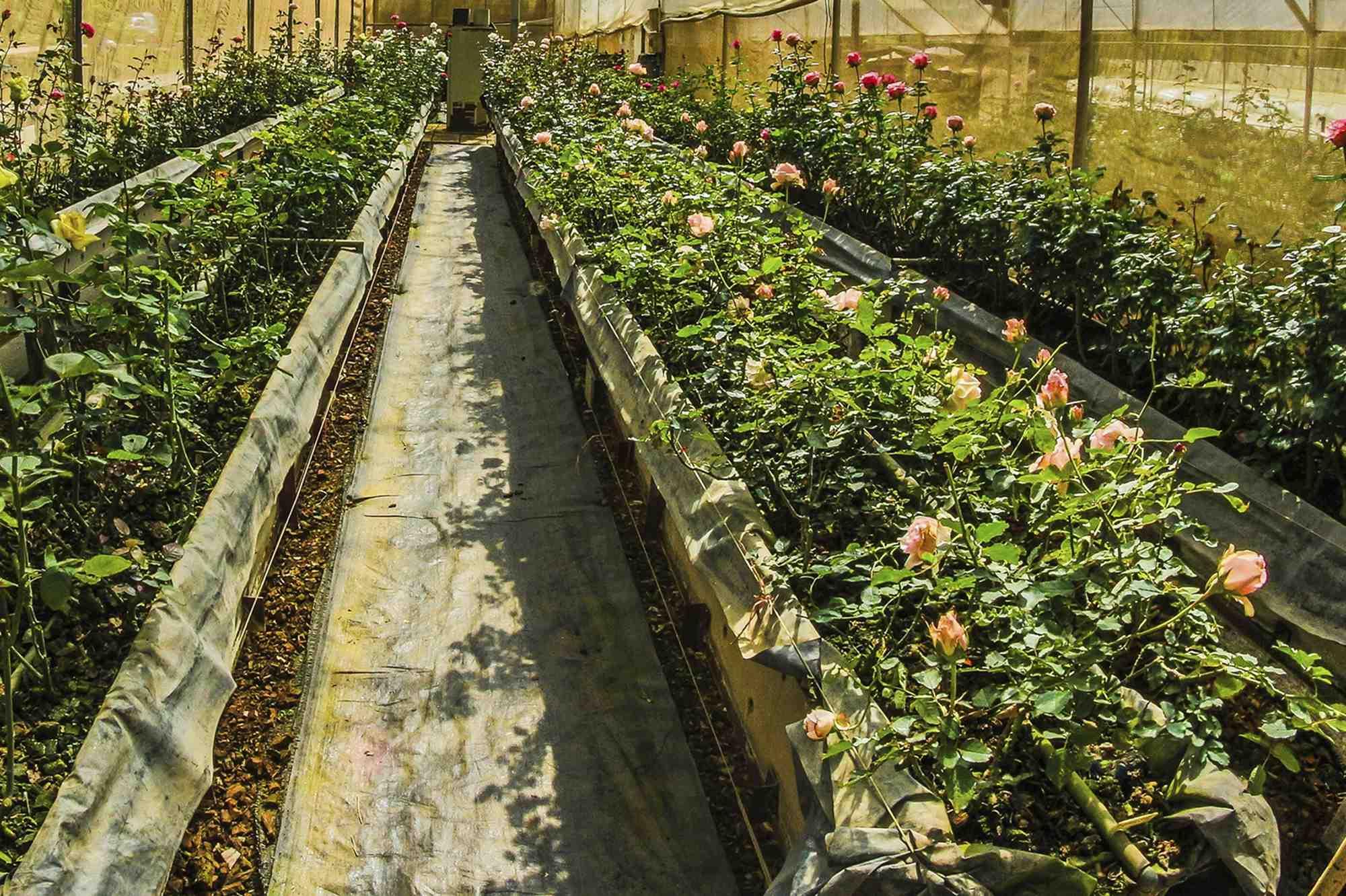 Bahçe Bakımı ve Bahçıvanlık