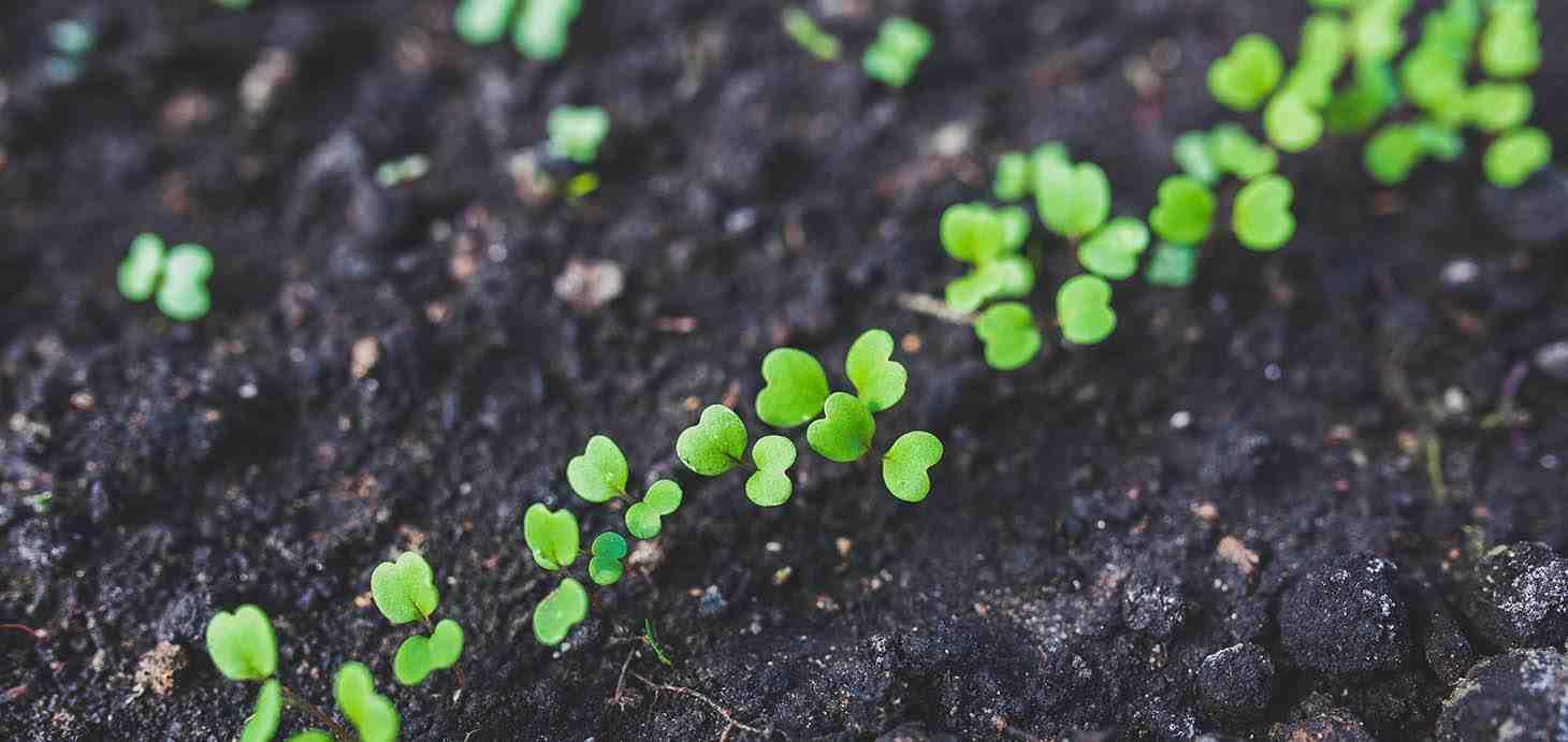Sebze Fidesi Üretimi