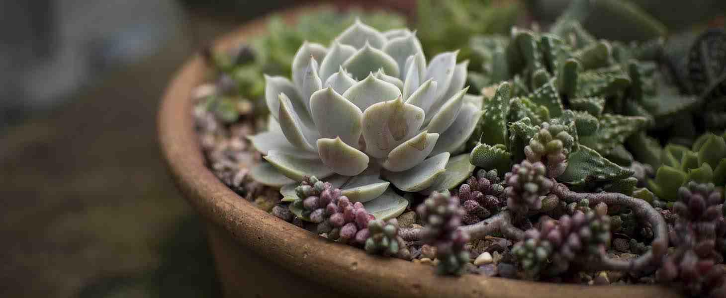 Temel İç Mekan Bitkileri Yetiştiriciliği