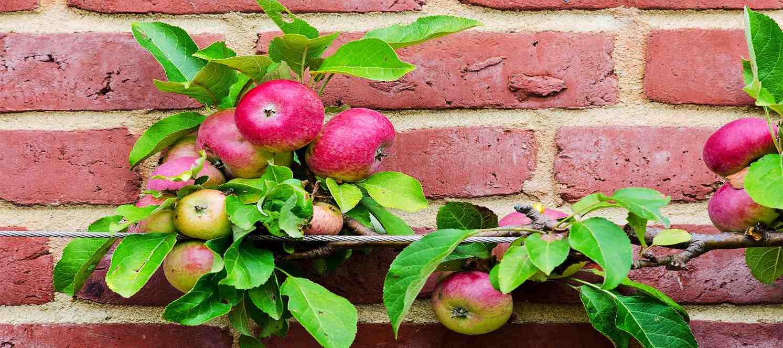Balkonda Sebze-Meyve Yetiştirme Atölyesi
