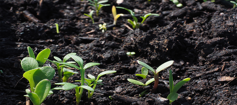 Bitkilerde Vejetatif Üretim Teknikleri Atölyesi