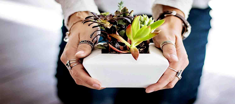 Temel İç Mekan Bitkileri Yetiştiriciliği Atölyesi